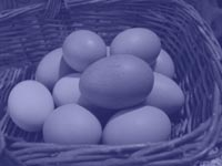 all the eggs in one basket - power point backgrounds