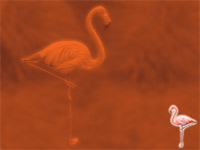 flamingo - powerpoint backgrounds