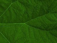 leaf - powerpoint backgrounds